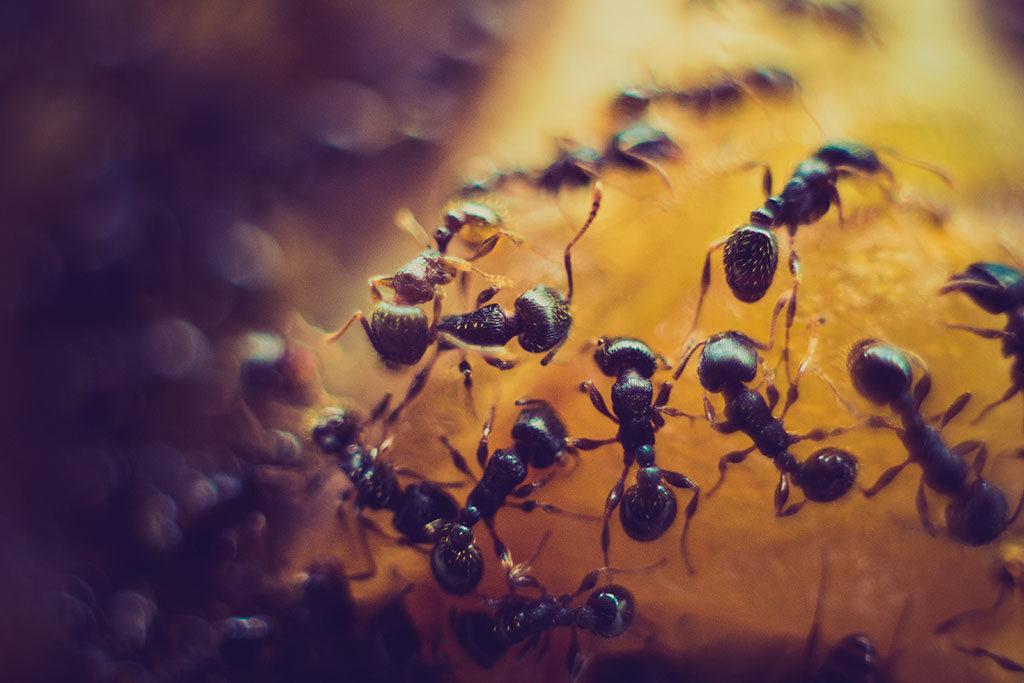 Ameisen bekämpfen in München
